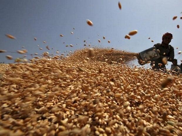 How India's grain policies stoked Food Corporation of India's debt binge