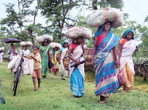Assam forest dwellers panic after Supreme Court order of eviction