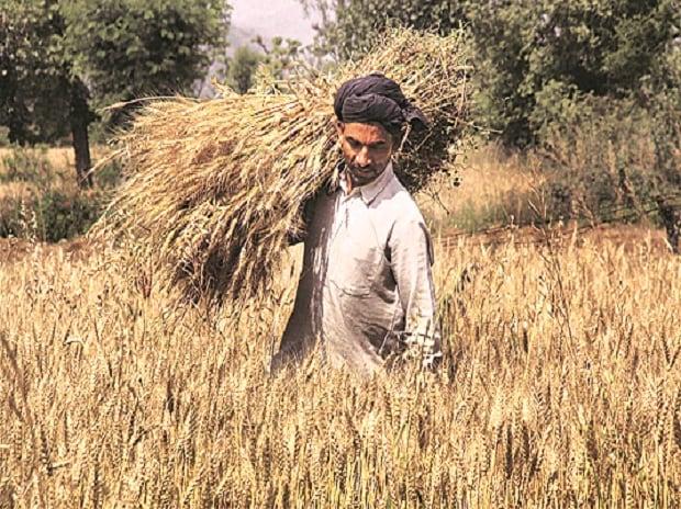 Farmer, Farm debt, farm loan waiver