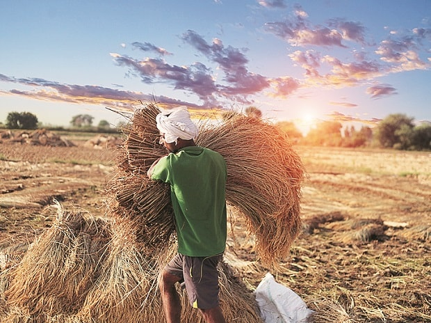Cash aid may replace agri distress buying