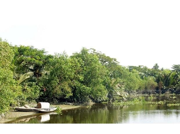 Part of newly developed mangrove forest along the Chitra river in Katakhali village under Mulghar union of Bagerhat. Photo: Sheikh Hedayet Ullah