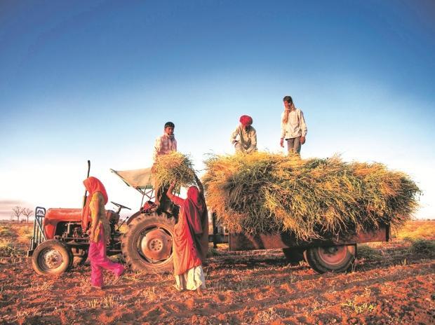agriculture, farming, farmer, crop, crop insurance
