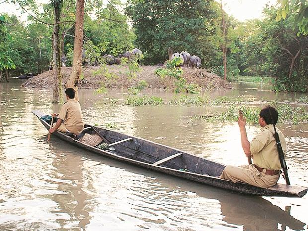 India is currently the most dangerous country for forest rangers: Study