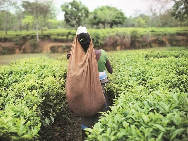 Tata Global Beverages to set up tea packaging ...