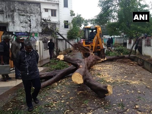 Trees were uprooted in Visakhapatnam district's Narsipatnam after strong winds and rainfall hit the region (Photo: ANI)