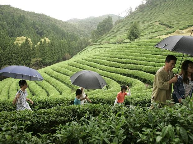 India's tea exports up 2% by value on whole-leaf shipments to Iran