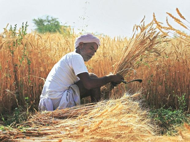 Real-time price, demand forecast for select crops from next kharif season