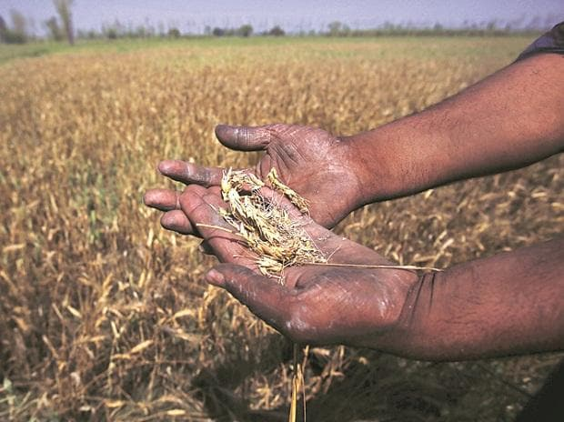 Kharif crop production to be higher this year on better monsoon: Agri Min