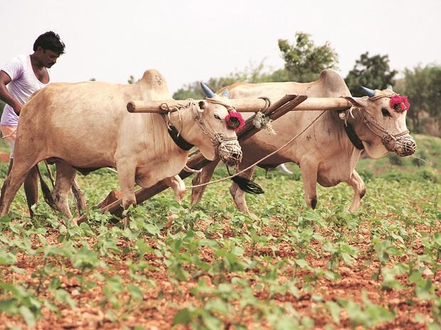fagriculture