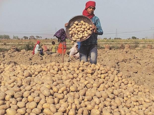 Will withdraw case if FC5 potato farming is stopped: PepsiCo