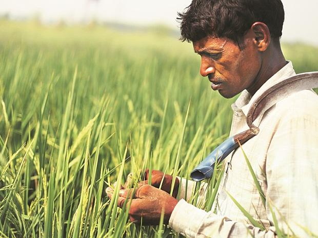 Currently, DBT is given to fertiliser companies who sell at a subsidised rate to farmers