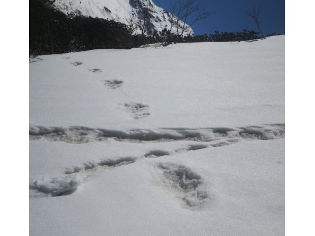 Indian Army claims to have spotted Yeti footprints, tweets photos