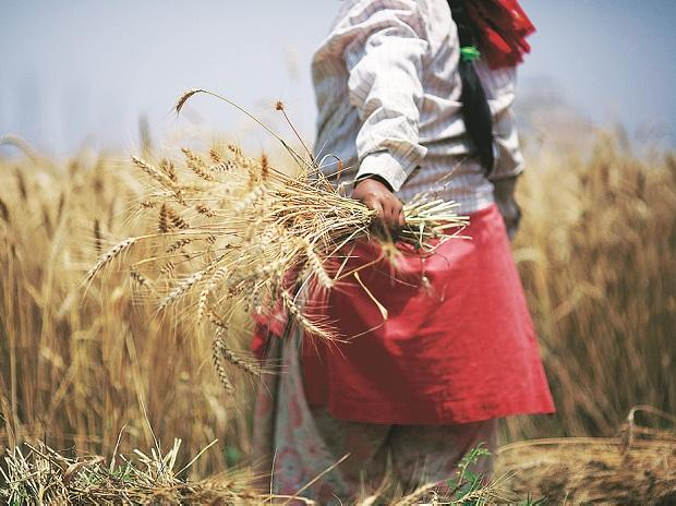 Economic Survey 2019: Private investment in agriculture is falling