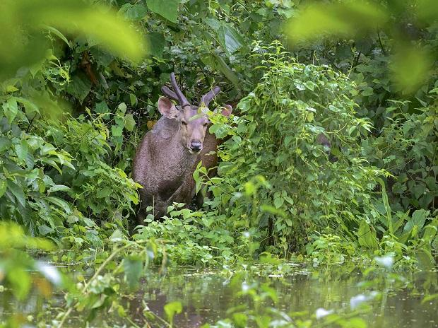 Almost 90 per cent of the Kaziranga National Park has been submerged