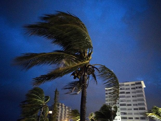 Strong winds move the palms of the palm trees at the first moment of the arrival of Hurricane Dorian in Freeport, Grand Bahama, Bahamas, Sunday Sept. 1, 2019. AP/PTI