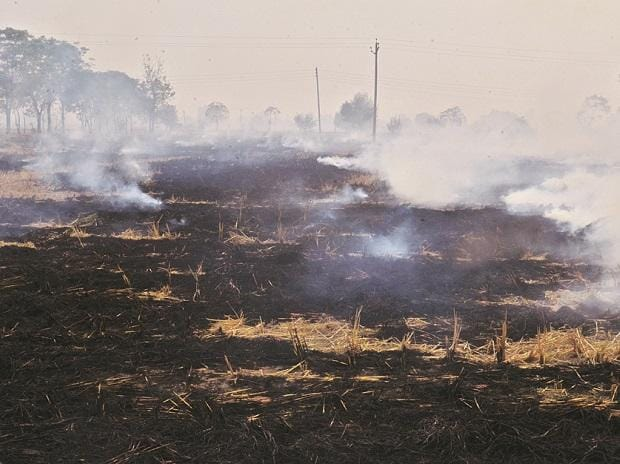Stubble burning