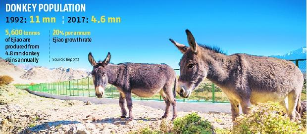 Is India's donkey population falling prey to Chinese 'Ejiao' producers?