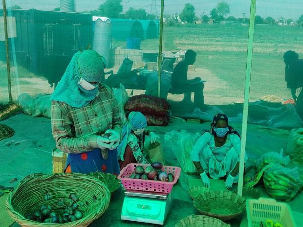 organic food, organic farming