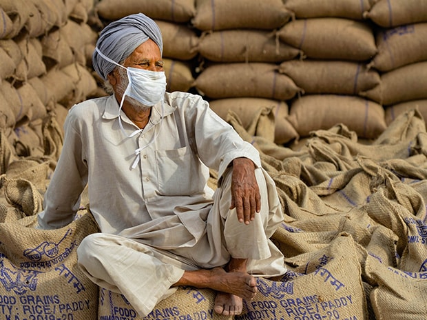 A farmer waits for his wheat produce procured at the New Grain Market amid ongoing COVID-19 lockdown, in Chandigarh. Photo: PTI