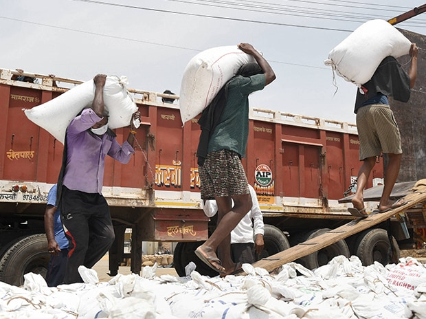 Labourers load sacks onto a truck at a grain market on the eve of Labour Day, during a nationwide lockdown, in Bikaner. Photo: PTI