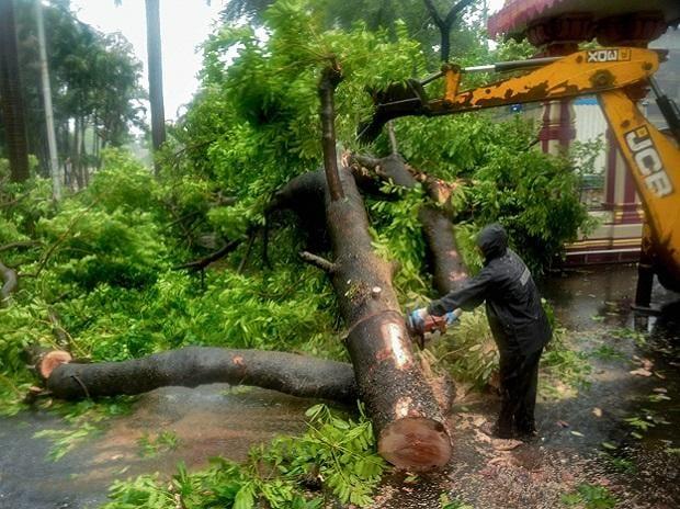 mumbai, monsoon, rain, nisarga, clouds, tree, jcb