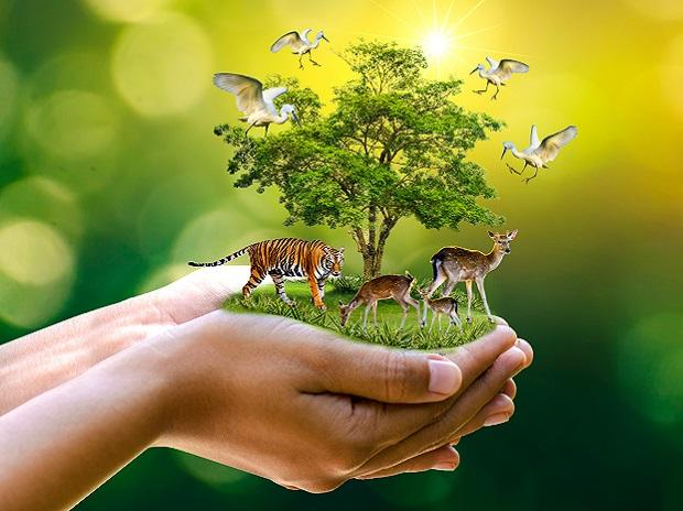 nature, nature conservation, wildlife