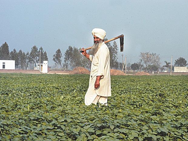 farmers, punjab, agriculture, farming, farm, crops, produce, msp