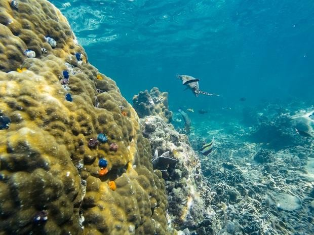 Coral reef, climate change, Chagos Archipelago