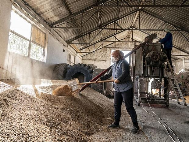 Romania, agriculture, economy, workers, grains