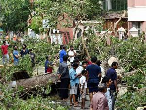 Residents looking at the uprooted trees in an area worst hit due to the Cyclone Vardah