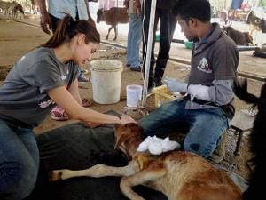 Anushka Sharma Animal Aid Charitable Trust