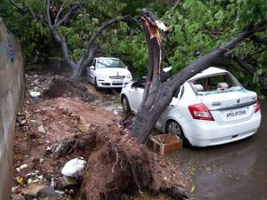 A view of the uprooted trees and damaged cars after heavy rains in Hyderabad