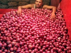 A bendor sorting onions at a storehouse of a wholesale market