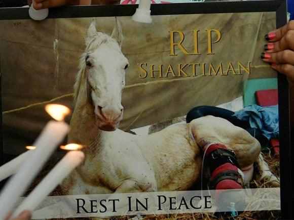 Shaktimaan Horse, Ganesh Joshi Horse, Police horse Shaktiman, Shaktimaan Horse Died, Ganesh Joshi bjp, Police Horse, Shaktimaan Horse bjp mla, Shaktimaan Horse Death, shaktimaan horse leg,  Shaktimaan joshi, Politics