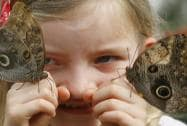 Ava Kennedy, 6, poses as she looks closely at two owl butterflies as they land on her hands