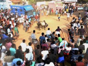 Jallikattu: Tamil Nadu reels under protests; CM knocks PM's door