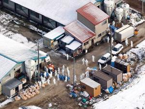 Health officials investigate a chicken farm in Aomori city, Aomori prefecture, northern Japan