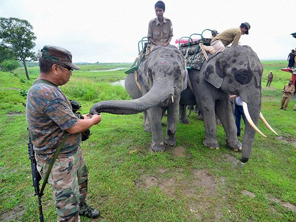 elephant safari, Kaziranga National park, Opening day