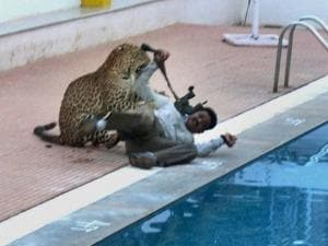 A leopard attacks a cameraman in a school premises in Bengaluru