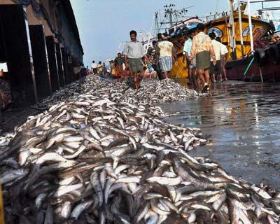 Fishing boats at Kochi harbour