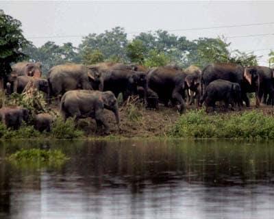 Elephants at Kaziranga Sanctuary