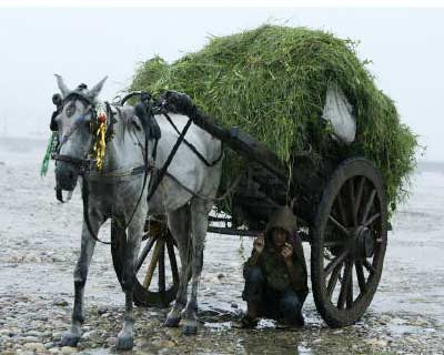 <p>A boy takes shelter from the rain under his horse-cart on the banks of the Tawi river in Jammu</p><p><b>Monsoon rains were 39% above normal in the week to Sept. 7, strengthening from 18% above average in the previous week, two sources at the weather office said on Thursday.</b></p><p>The monsoon rains were three% above average since the start of the June-September season, in line with the weather office&#39;s latest forecast of a normal monsoon in 2011.</p>