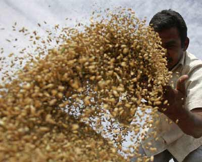 "<b>A labourer sifts wheat crop in a field on the outskirts of Ahmedabad</b></p><p>The government will decide next week whether to allow wheat exports, Food Minister KV Thomas said on Tuesday, as the world's second-biggest producer after China weighs prospects of a record harvest against stubbornly high food inflation.</p><p>Farm Minister Sharad Pawar has consistently said India should allow wheat exports, which would benefit producers as international prices are currently near two-year highs.</p><p>But Thomas has said he is against overseas sales, according to a PTI report.</p><p>""We are against wheat exports. We feel that if we open exports, domestic prices will be affected,"" Thomas said, according to the PTI report published in the Business Standard newspaper."