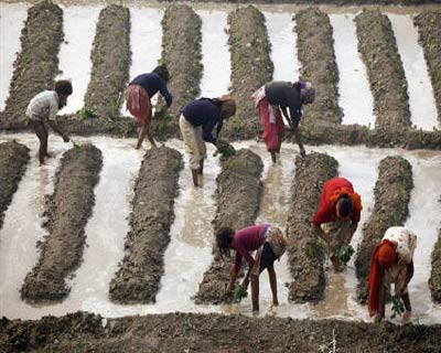 <p><b>Labourers work in a vegetable field in New Delhi</b> </p><p> India's food inflation accelerated to a 10-week high in mid-December on rising prices of vegetables, while the fuel index also rose, adding to inflationary worries in Asia's third-largest economy. </p><p> India's annual wholesale price index (WPI) inflation for November stood at 7.48 per cent, and a recent spike in prices of vegetables like onions and potatoes as well as an increase in petrol prices earlier this month are expected to push the headline inflation number higher in December. </p><p> India's food price index rose 14.44 per cent while the fuel price index climbed 11.63 per cent in the year to December 18, data on Thursday showed. </p>