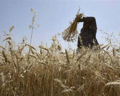 """</p><b>A labourer wipes sweat from his forehead as he works in a wheat field on the outskirts of Jammu.</b></p><p>India's empowered group of ministers will decide whether the country should allow exports of wheat this year, Food Minister K.V. Thomas said on Monday.</p><p>rn""""The decision on wheat exports will take some time ... The empowered group of ministers will finally take a call on this issue,"""" Thomas said.rn</p><p>India is the world's second-biggest producer of wheat and is heading for a record harvest this year, with silos already overflowing.rn</p><p>Junior Farm Minister Arun Yadav said in March a decision on exports could come as early as this month.</p>"""