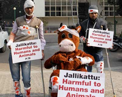 PETA protests against 'Jallikattu'