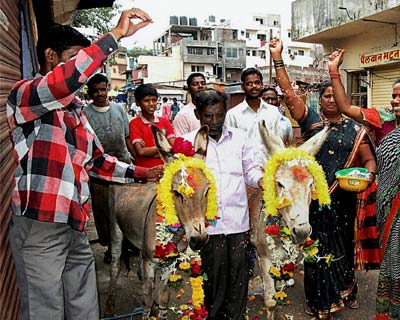 Marriage of donkeys for rains