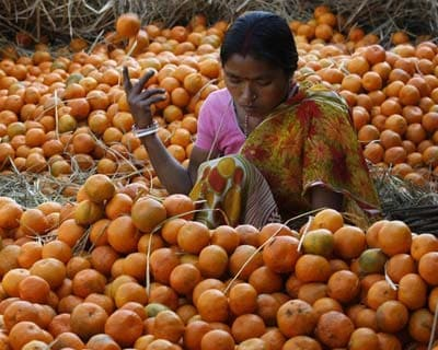 <p><b>A labourer collects oranges at a wholesale fruit market in Siliguri</b></p><p>India's wholesale price index (WPI) rose a faster-than-expected 6.89% in March from a year earlier, mainly driven by higher food prices, government data showed on
