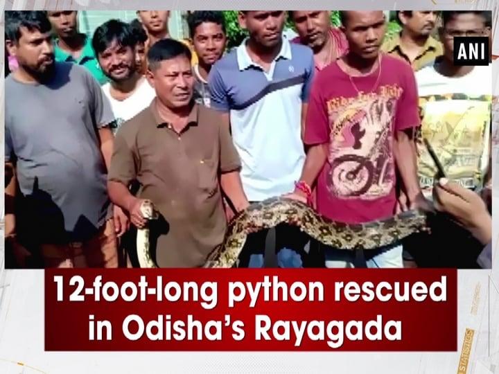12-foot-long python rescued in Odisha's Rayagada