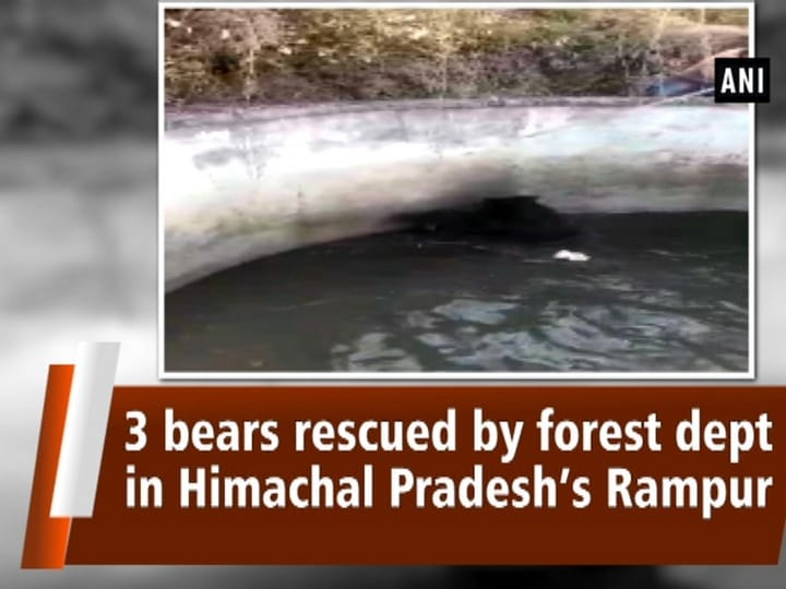 3 bears rescued by forest dept in Himachal Pradesh's Rampur